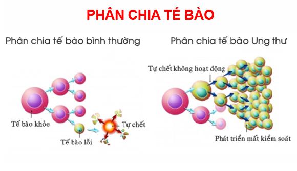 Dac diem cua te bao ung thu (3)