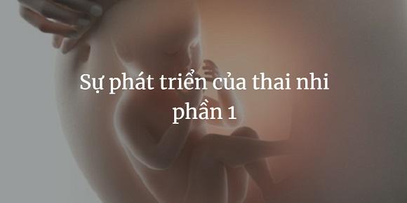 Su phat trien cua thai nhi phan 1 (3)