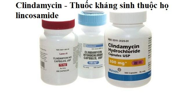 Clindamycin thuộc nhóm kháng sinh nào?